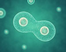 細胞のエネルギー工場「ミトコンドリア」を元気にするALA