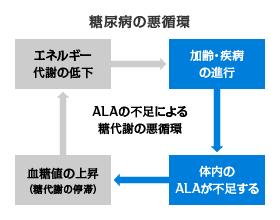 """ALA不足による糖代謝の""""悪循環"""""""