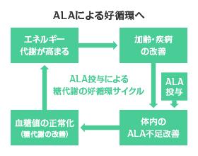 "ALAを積極的に摂取して、""好循環""サイクルへ"