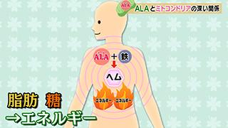 BS-TBS 「健康!ALAかると」 ♯3「ミトコンドリアとALAの密接な関係って?」